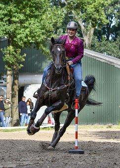Horse, Equine, Equestrienne, Equestrian
