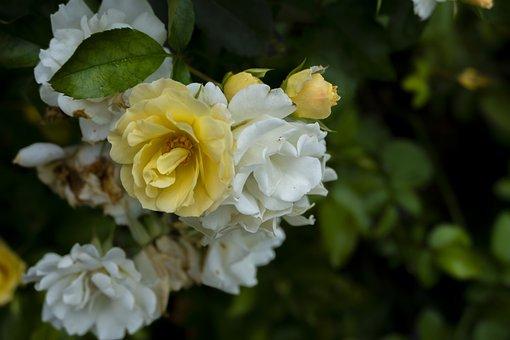 Flowers, Petals, Plants, Garden, Flora, Botany