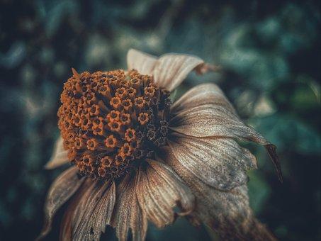 Flower, Petals, Pistils, Stem, Plant, Dry, Flora