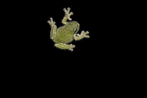 Tree Frog, Isolated, Cutout, Amphibian, Frog, Icon