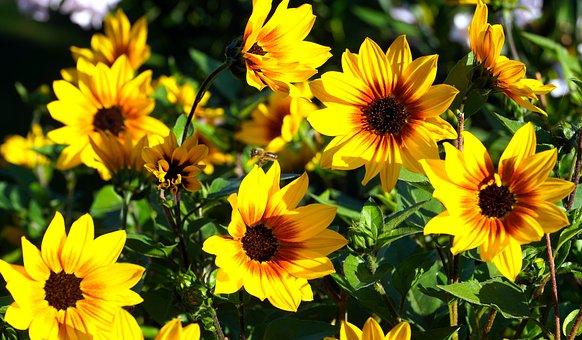 Flowers, Petals, Bush, Garden, Blossom, Bloom, Nature