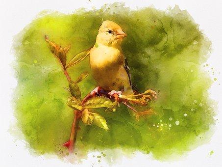 Photo Art, Digital Painting, Bird Painting, Goldfinch