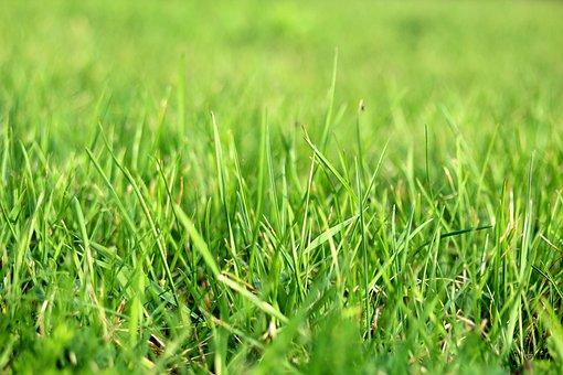 Grass, Grassfields, Grassland, Lawn, Blades, Green