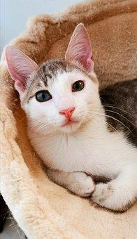 Cat, Kitten, Animal, Kitty, Feline, Pet, Domestic Cat