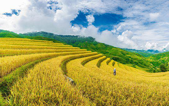 Landscape, Terraces, Crops, Rice Terraces, Farm