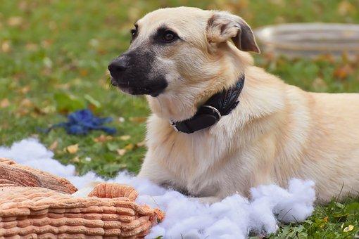 Dog, Pet, Pillow, Play, Animal, Cute, Mammal, Nature