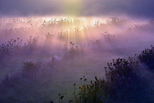 Morning Fog, Fog, Meadow, Fields, Flowers, Grass