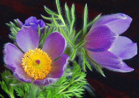 Flower, Petals, Pistils, Plant, Leaves, Foliage, Flora