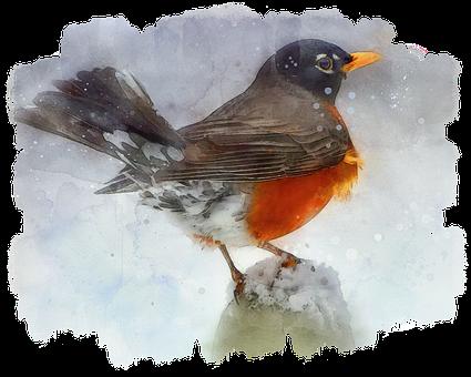 Photo Art, Digital Painting, Bird Painting