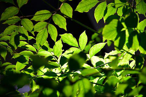 Leaves, Plant, Tree, Branches, Foliage, Flora, Nature