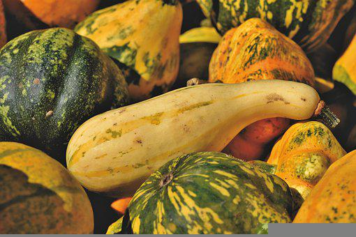 Pumpkins, Squash, Produce, Harvest, Organic, Vegetables