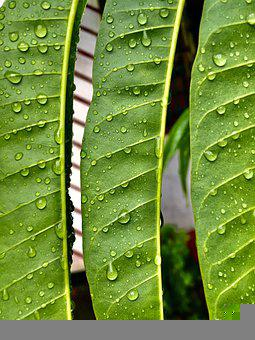 Leaf, Drops, Rain, Water, Wet, Raindrops, Plant