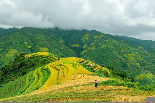 Landscape, Terraces, Rice Terraces, Farm, Cropland