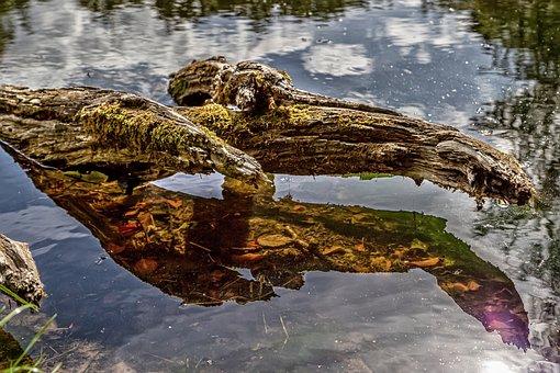 Root, Lake, Reflection, Mirroring, Tree, Stump, Water