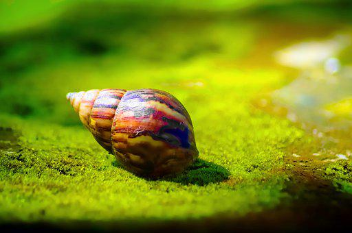 Snail, Shell, Animal, Mollusk, Nature