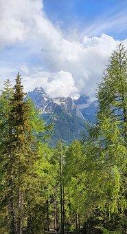 Alps, Trees, Undergrowth, Forest, Alpine