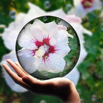 Hibikus, Hand, Blossom, Bloom, Summer, Flower