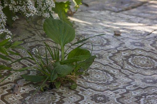 Lenoleum, Grass, Zeleniny, Village