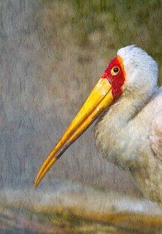 Glutton, Stork, Bird, Animals, Storks, Ciconiidae