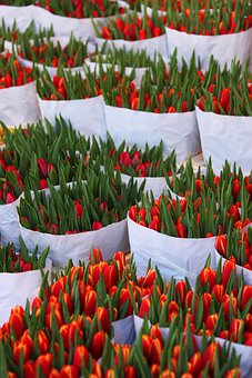 Background, Bag, Beautiful, Bloom, Blossom, Bunch