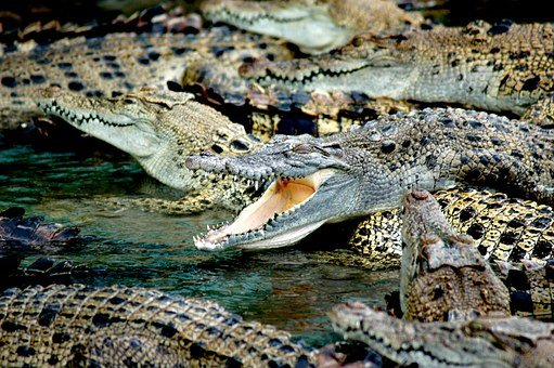 Crocodiles, Crocodile Farm, Australia, Farm, Gators