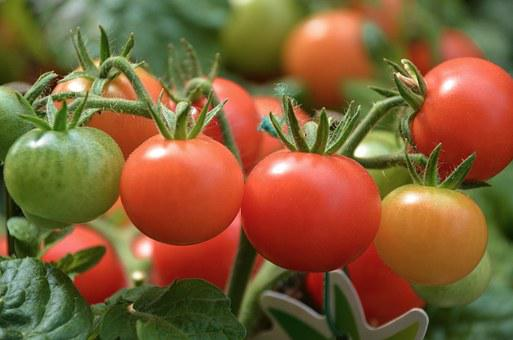 Tomatoes, Vegetables, Red, Delicious, Market, Stand