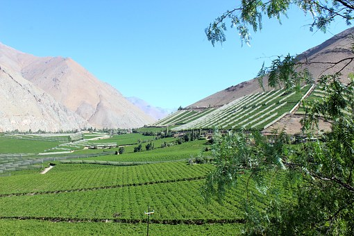 Elqui Valley, Chile, People, Pisco, Elqui