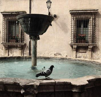 Pigeon, Fontana, Narni, Country, Window Vases, Water