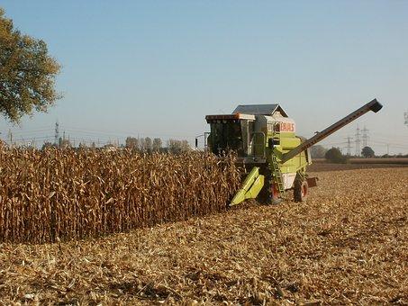 Corn, Harvest, Agriculture, Maize, Food, Crop, Farming