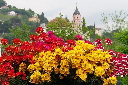Flower, Blossom, Bloom, Elf Mirror, Church, Meran