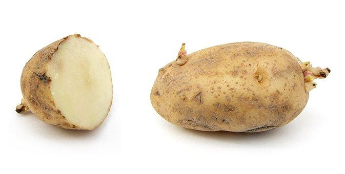 Potato, Earth Apple, Russet Burbank Potato, Grundbirne