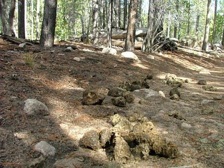 Dung, Scat, Feces, Horse, Path, Trail, Forest