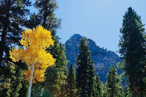 Trees, Yellow Tree, Autumn Season, Autumn Leaves