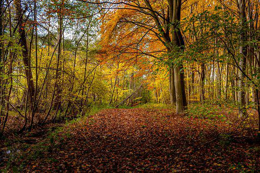 Forest, Woods, Trees, Autumn, Autumn Leaves