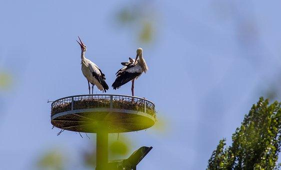 Storks, Birds, Nest, Pair Of Birds, Pair Of Storks