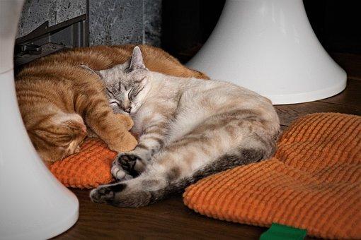 Cats, Sleeping, Cuddle, Sleeping Cats, Sleeping Time