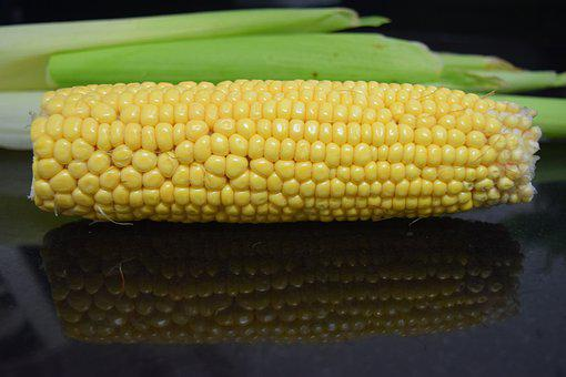 Corn, Cob, Corn On The Cob, Produce, Harvest, Organic