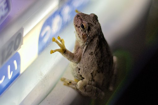 Frog, Amphibian, Animal, Eyes, Fauna, Vending Machine
