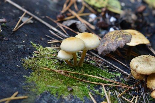 Mushrooms, Toadstools, Fungi, Moss, Nature, Forest