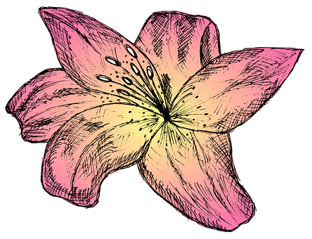 Lily, Flower, Pink Flower, Plant, Bloom, Blossom