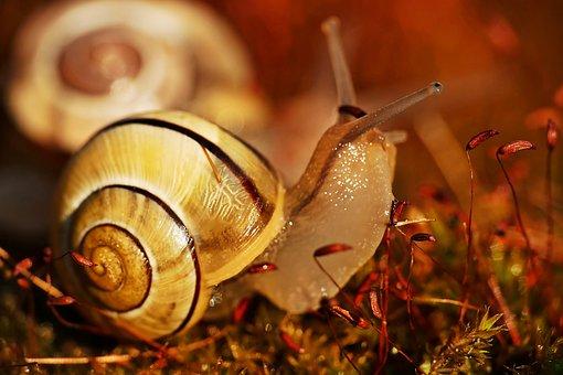 Snail, Mollusk, Animal, Snail Spiral, Shell, Moss