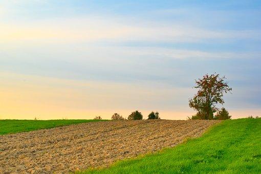 Field, Farm, Plantation, Pasture, Grassland, Grassfield