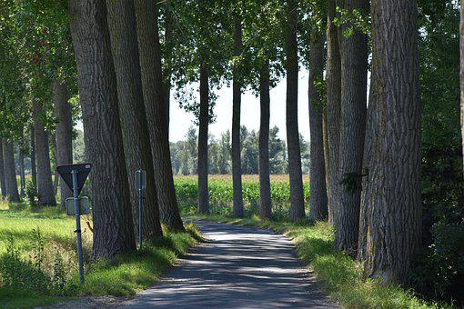 Road, Path, Trees, Leaves, Foliage, Park