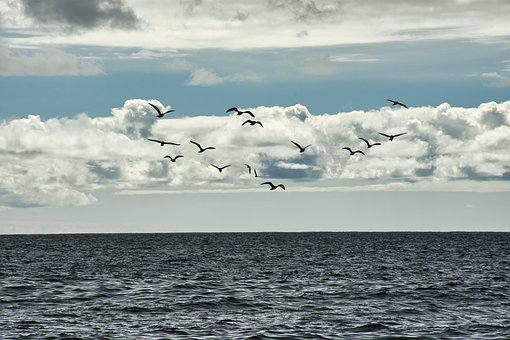 Seascape, Sea, Birds, Gulls, Seagulls, Seabirds, Flying