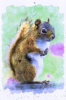 Squirrel, Nature, Wildlife, Mammal, Cute