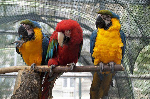 Parrots, Macaws, Birds, Perched, Ara, Zoo, Exotic Birds