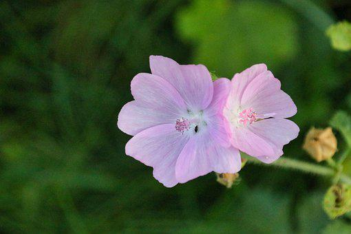 Flowers, Petals, Plant, Bloom, Blossom, Flowering Plant