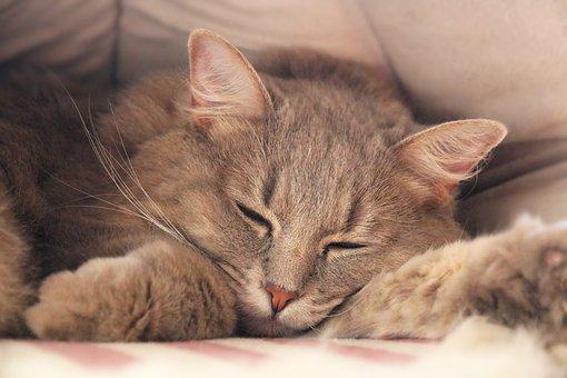 Cat, Animal, Pet, Domestic Cat, Feline, Mammal