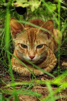 Cats, Feline, Kitty, Orange Cat, Pet