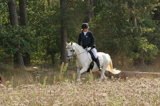 Horse, Horseback Riding, Horseback Rider, Saddle Horse